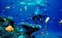 Scuba Dive at Las Caletas Puerto Vallarta Yachts3
