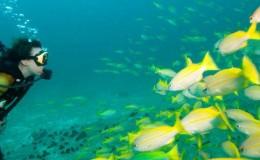 Scuba Dive at Las Caletas Puerto Vallarta Yachts4