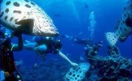 Scuba Dive at Las Marietas Puerto Vallarta Yachts4