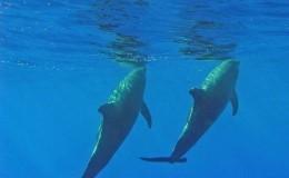 Scuba Dive at Los Arcos and Majahuitas Puerto Vallarta Yachts4