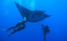 Scuba Dive at Los Arcos and Majahuitas Puerto Vallarta Yachts6