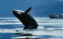 Whale-Watching-incentive-excursion