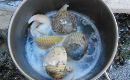 Whidbey Island Cooking clams