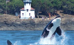 washington-whale-watching